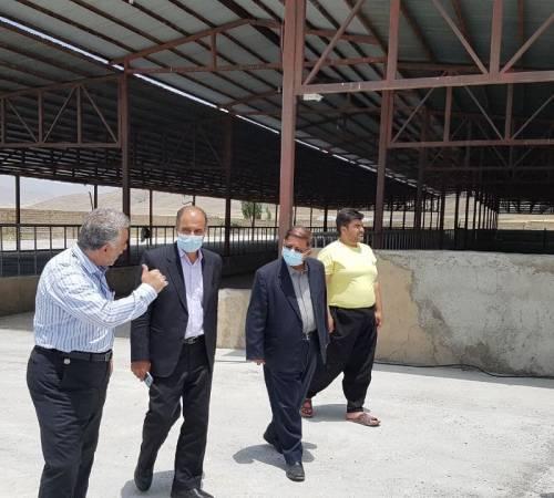 بازدید فرماندار شهرستان تویسرکان از یک واحد گاوداری شیری صنعتی در بخش قلقلرود